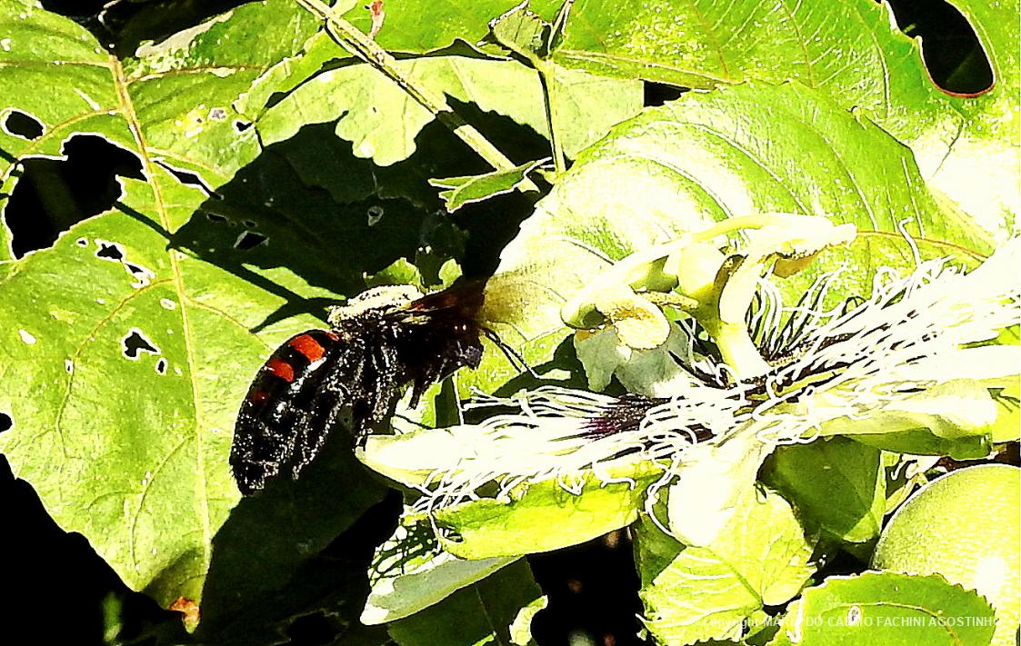 mamangaba biofaces bring nature closer